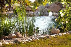 biolaghi, laghetti balneabili, piscina naturale